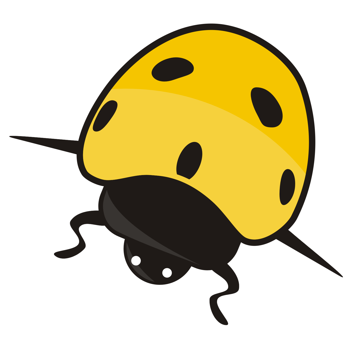 Detailed vector illustration of a ladybird